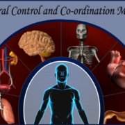 Neural Control and Co-ordination